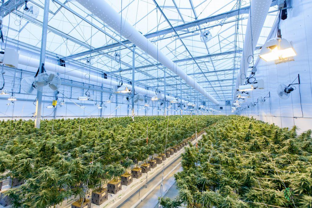 COVID cannabis reform cannabis cannabis in canada cannabis history