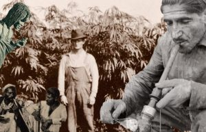 Smoke Signals: A Social History of Marijuana – Medical, Recreational and Scientific